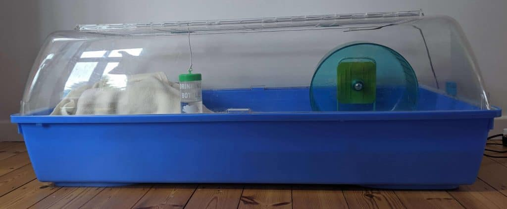 side view of pygmy hedgehog cage