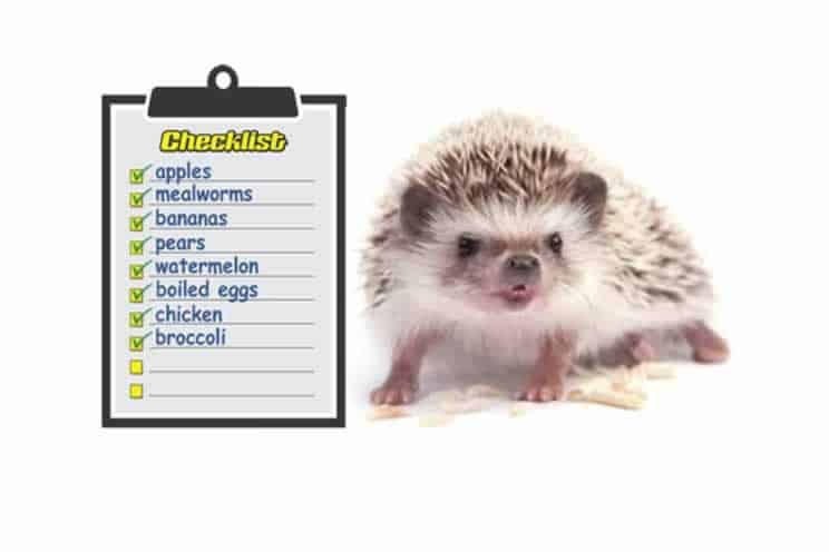 Pygmy hedgehog next to list of things they can eat