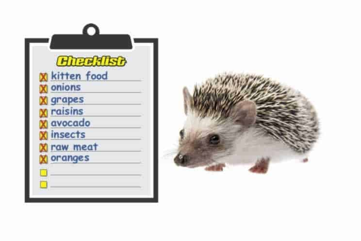 Pygmy hedgehog next to list of things they cannot eat